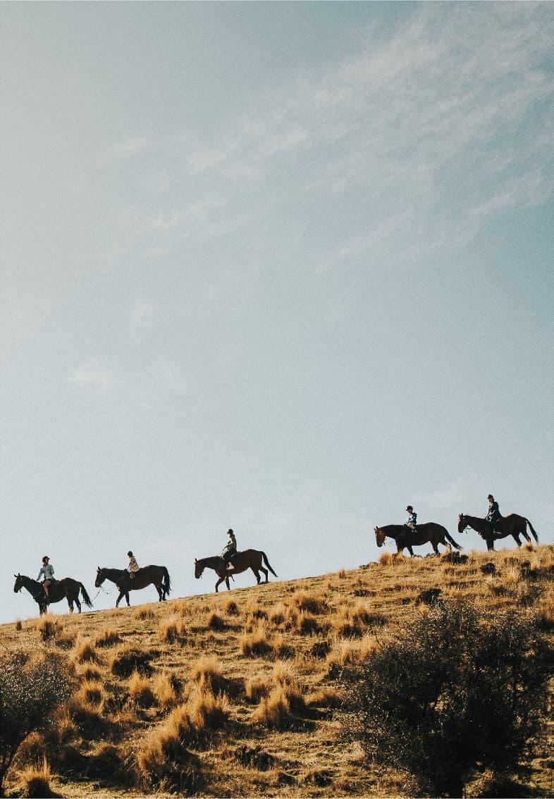 The Cardrona Horses